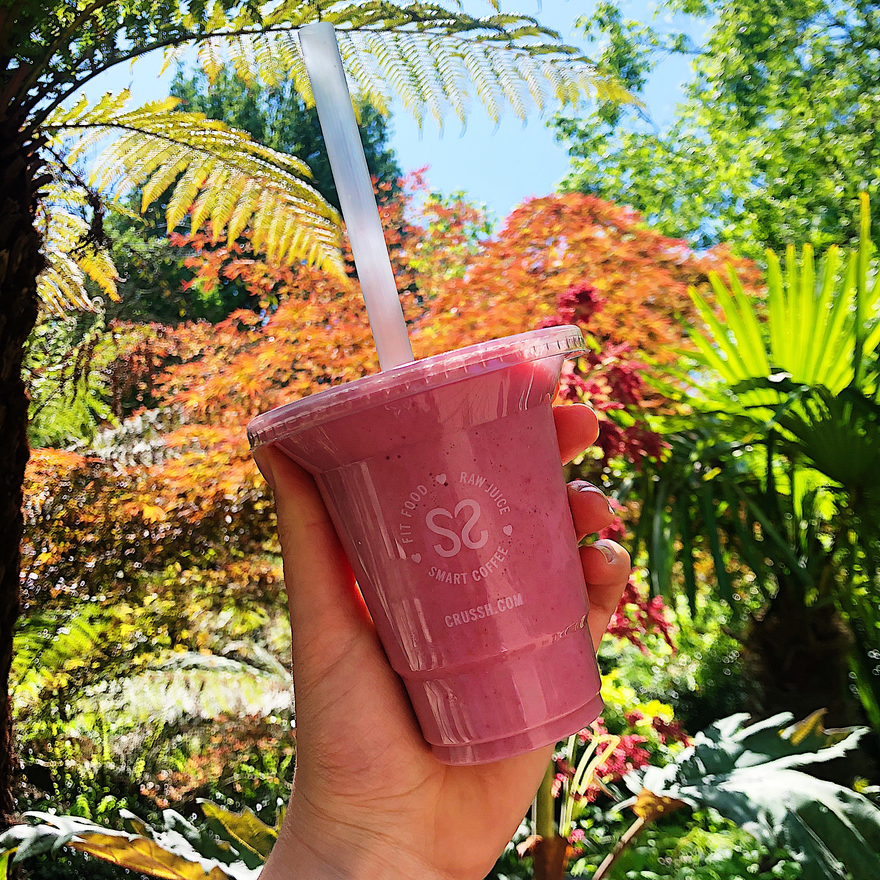 Smoothie in Sun, Tropical